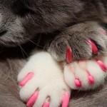 Kitty claw  3